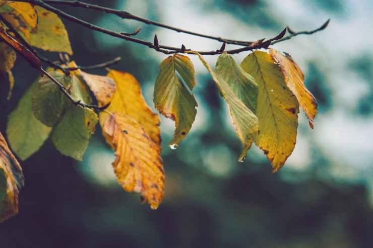 after the rain autumn autumn leaves blur